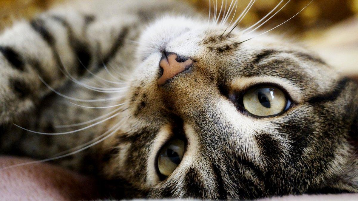 поясов живые картинки для рабочего стола кошки конце