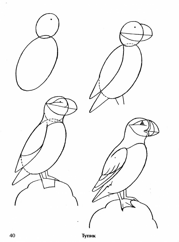 молочный рисунок птицы карандашом поэтапно картинки луговой распространённое
