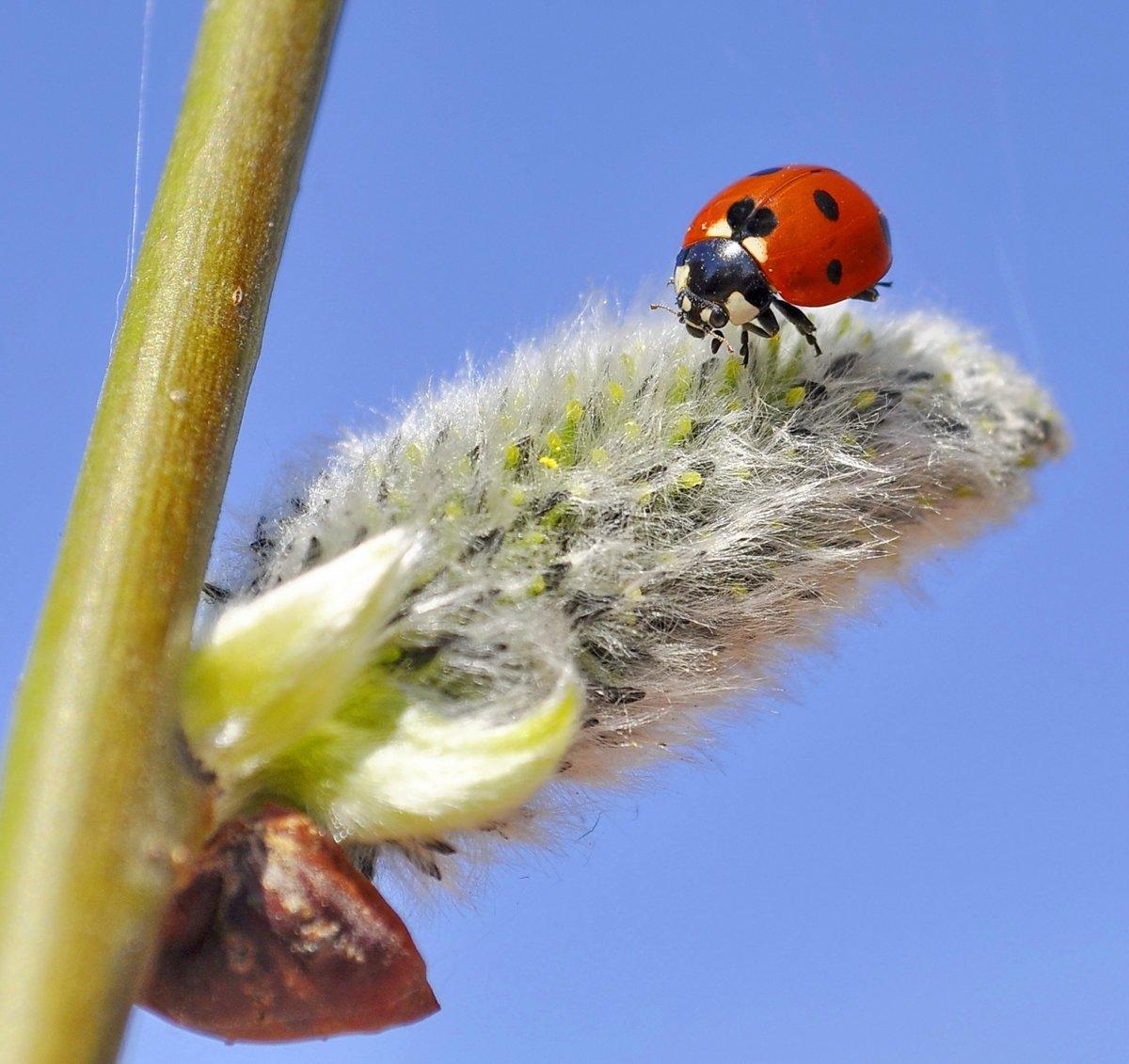 картинка первые насекомые ведите