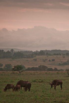 Дикая жизнь, Андрей Крюченко для «Fotodom.ru».  Свазиленд — крошечное королевство на юге Африки, известное своими заповедниками, в которых можно встретить слонов, львов и бегемотов.
