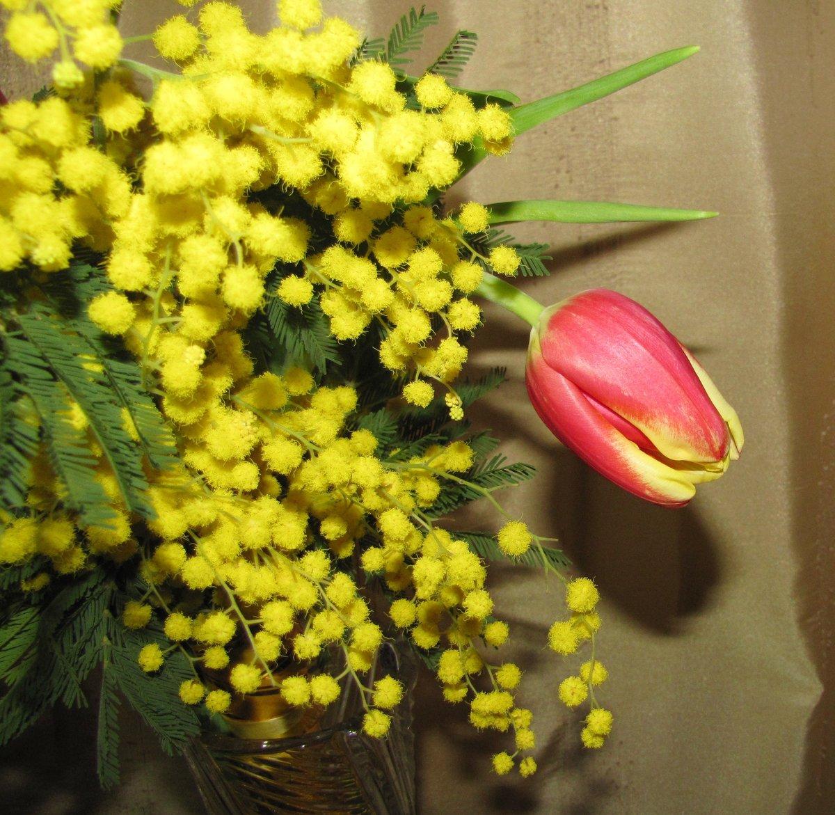 угольном картинки цветы мимоза и тюльпаны эти немецкие