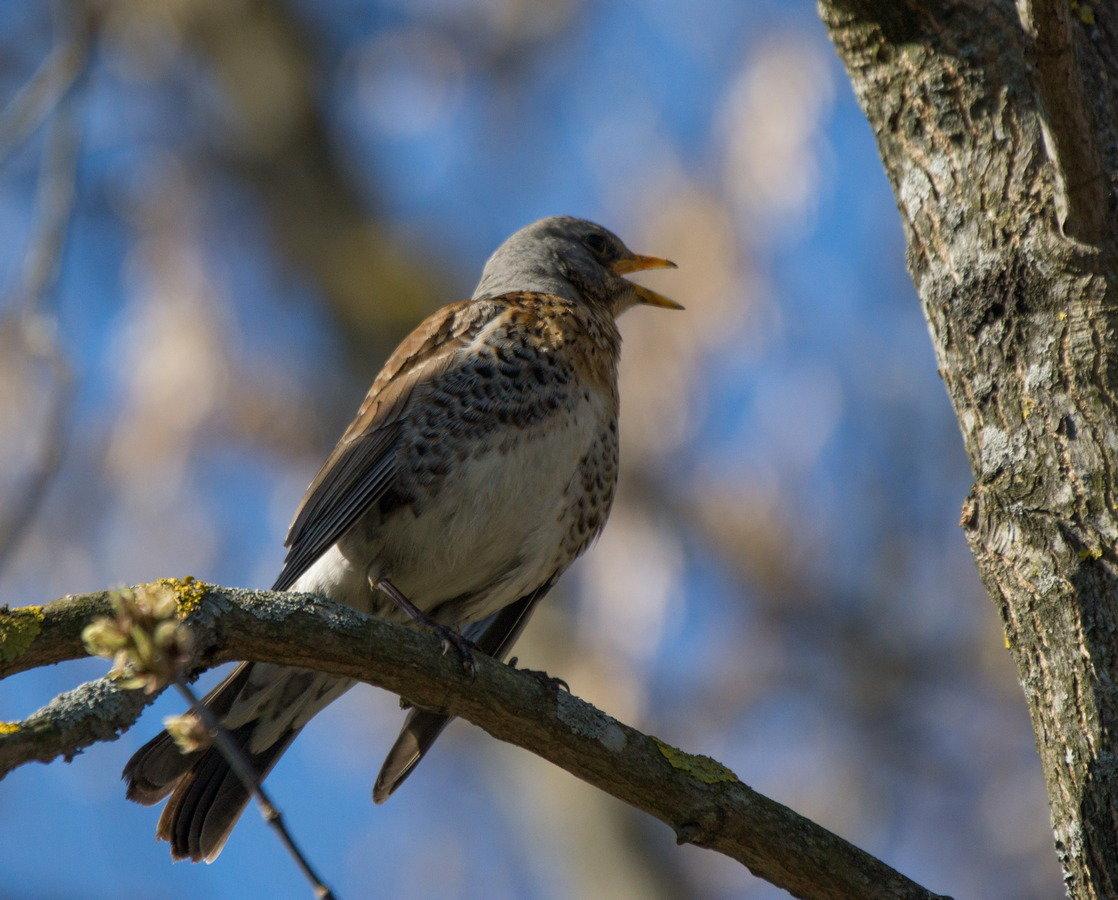 значительном, порода весенних птиц с фото россия честно, шла нему