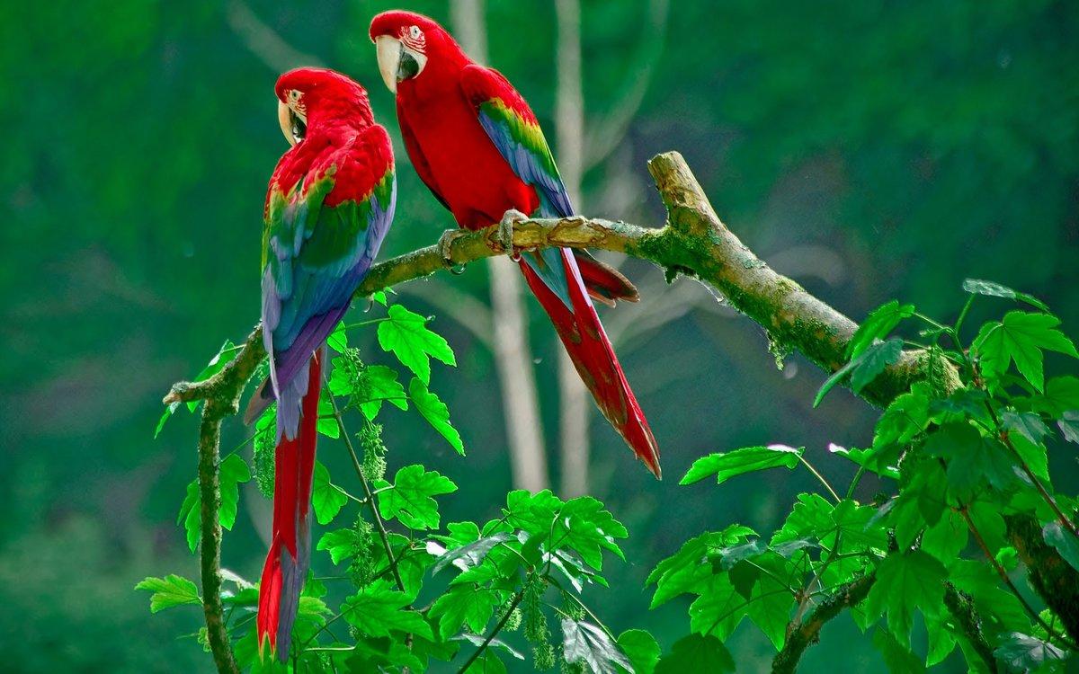 Цветов, букет зеленый попугай
