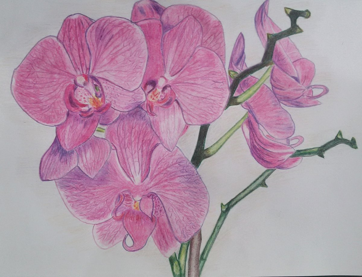 Картинки орхидей рисованные