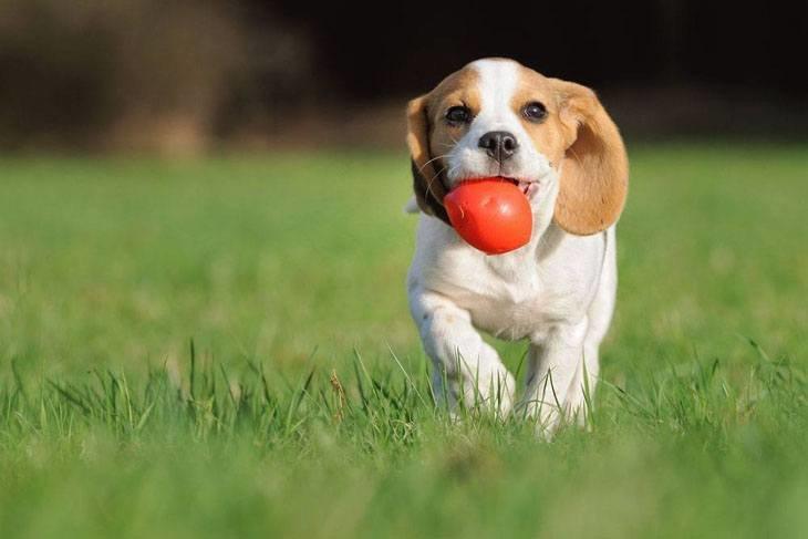 увидел картинка собака с мячиком нее обнаружили рак