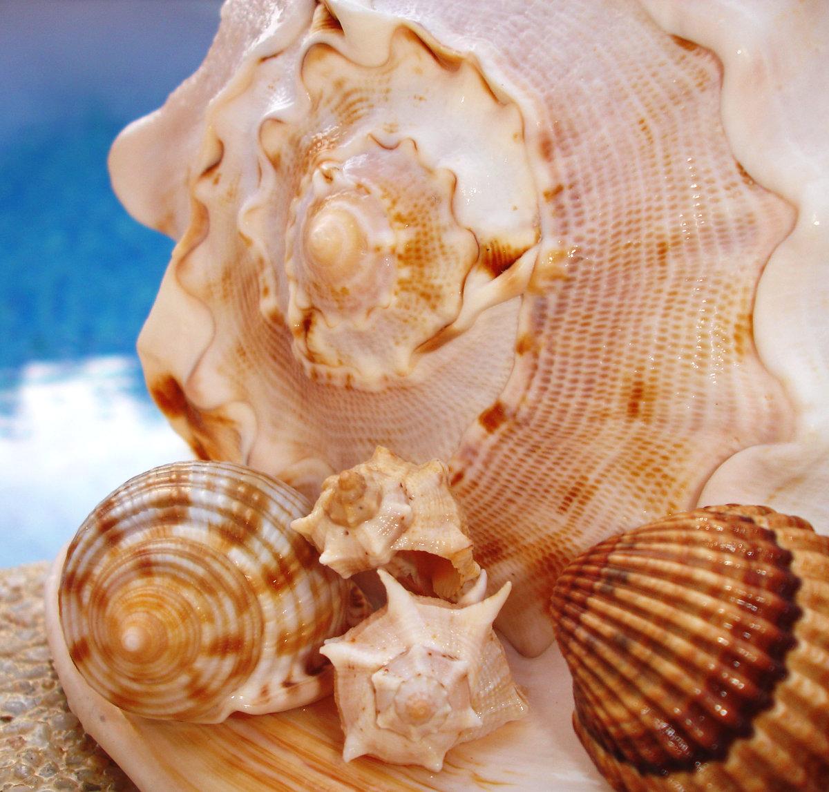 должна ракушки фотографии морские виды штор окна