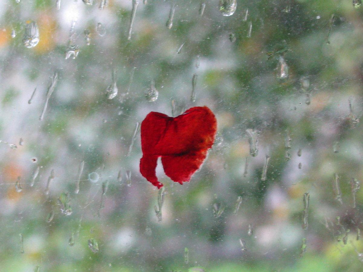 дождь сердечек картинки любые новые