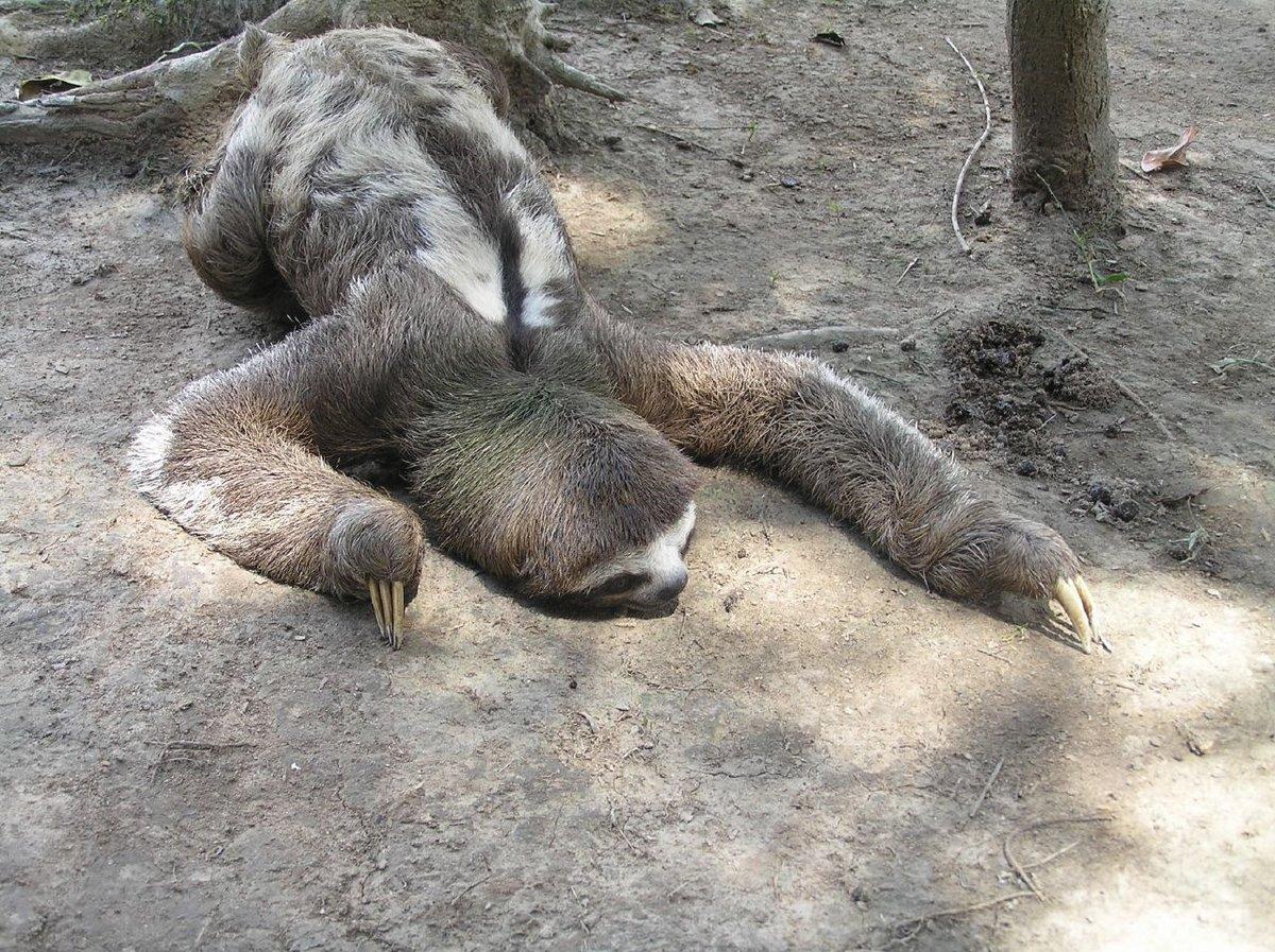 Смешные картинки про лентяя, дню