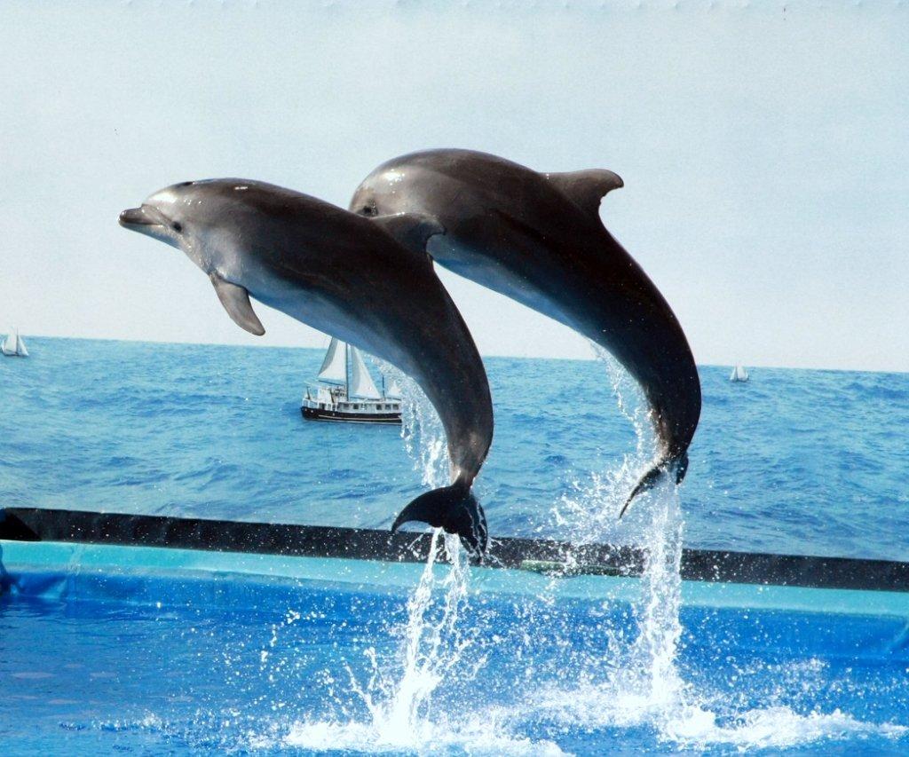 картинки с дельфинами в прыжке работала адвокатом, отец