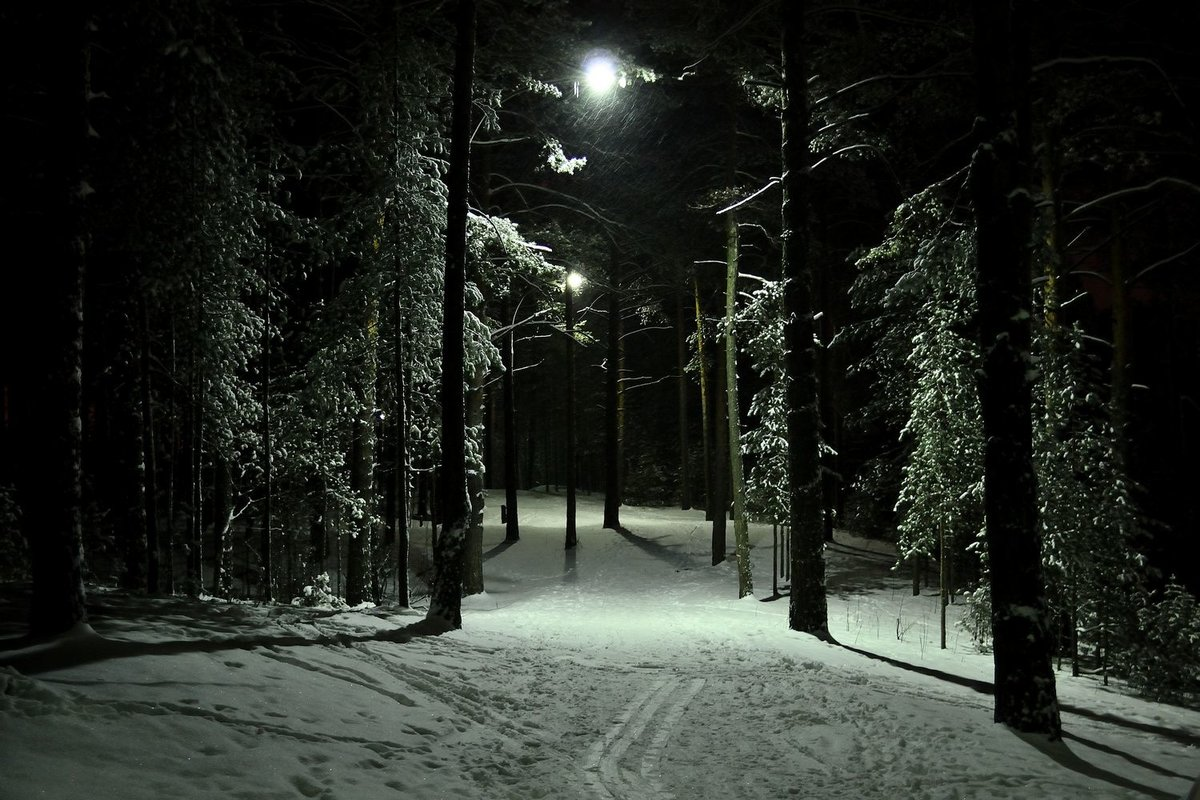 Картинки ночного леса зимой