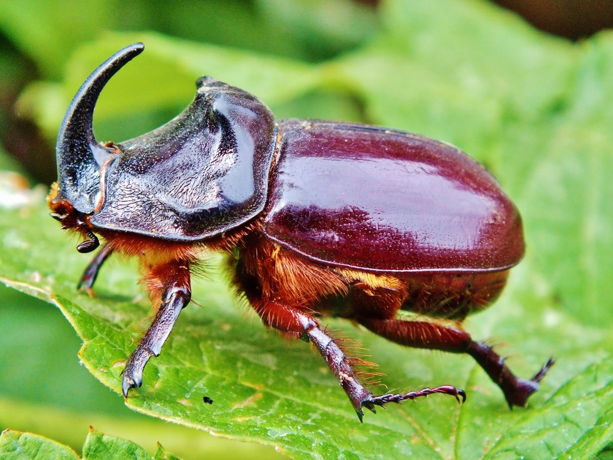 жуки с названием крупных животных начать