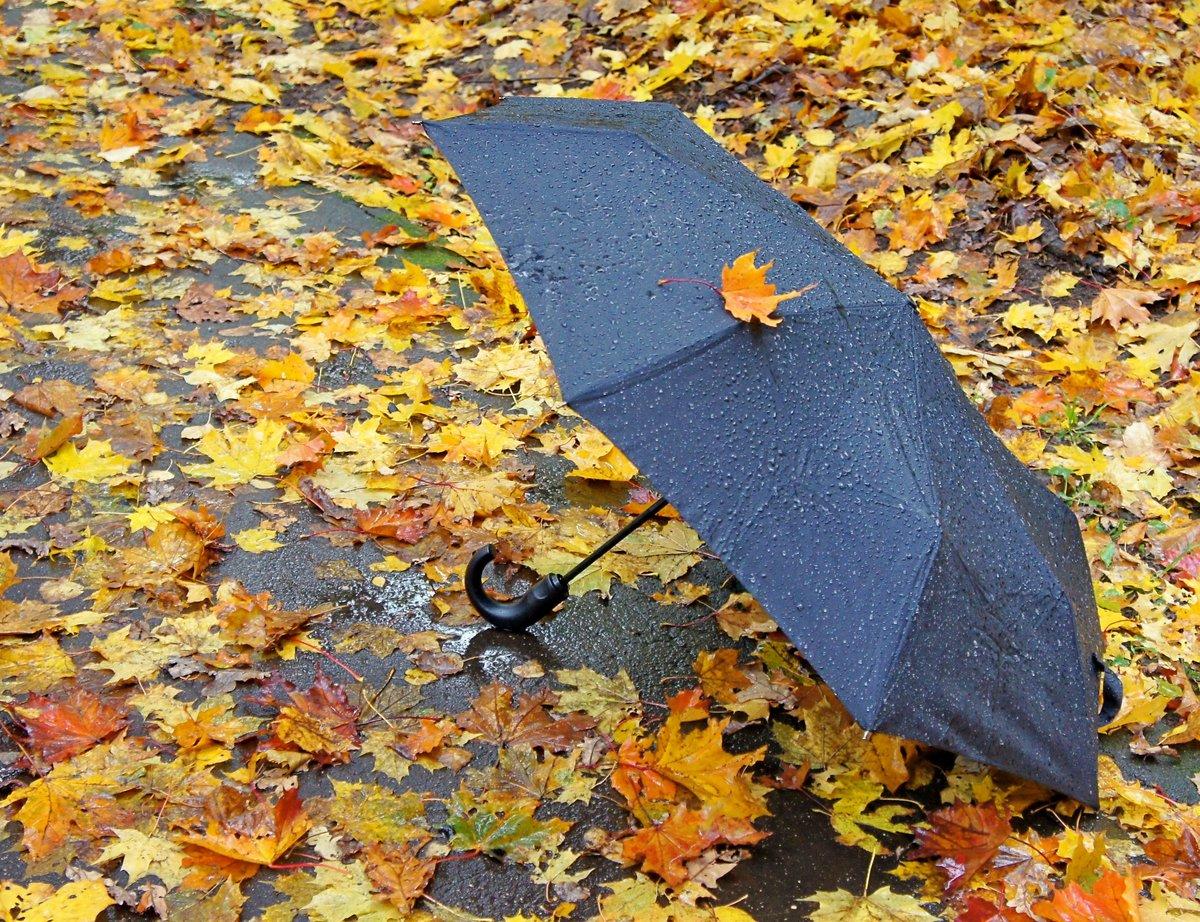Картинки зонтики осень