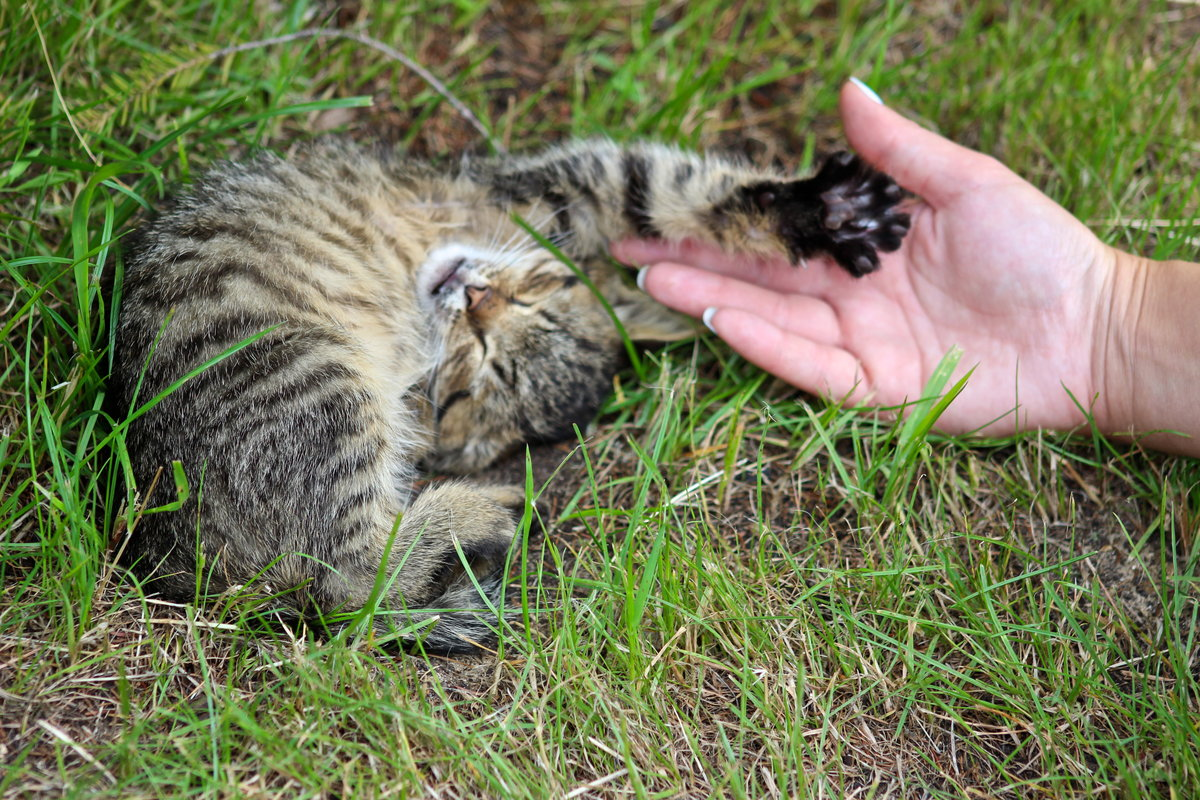 Картинки привет с котятами