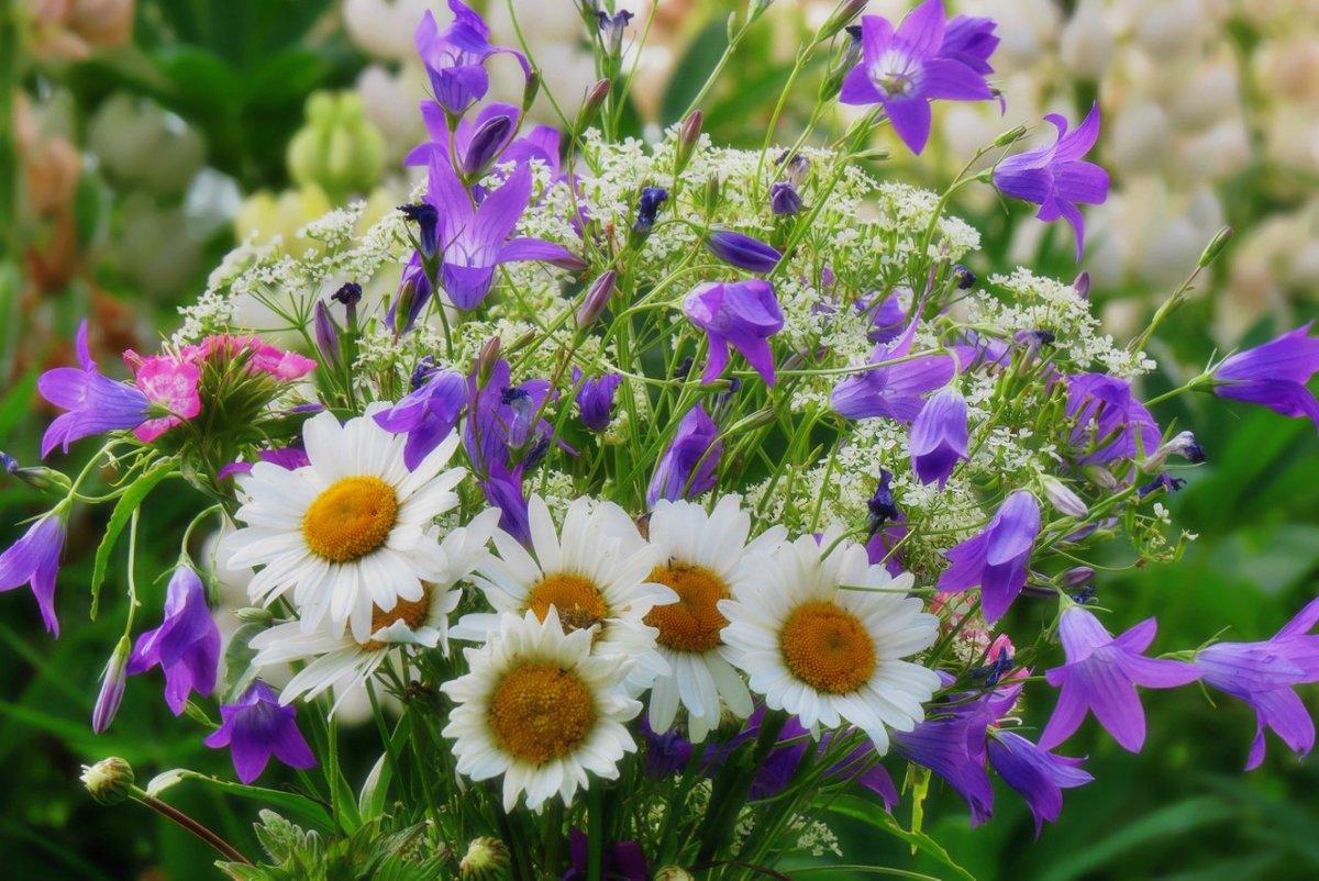 Картинки цветов полевых букет