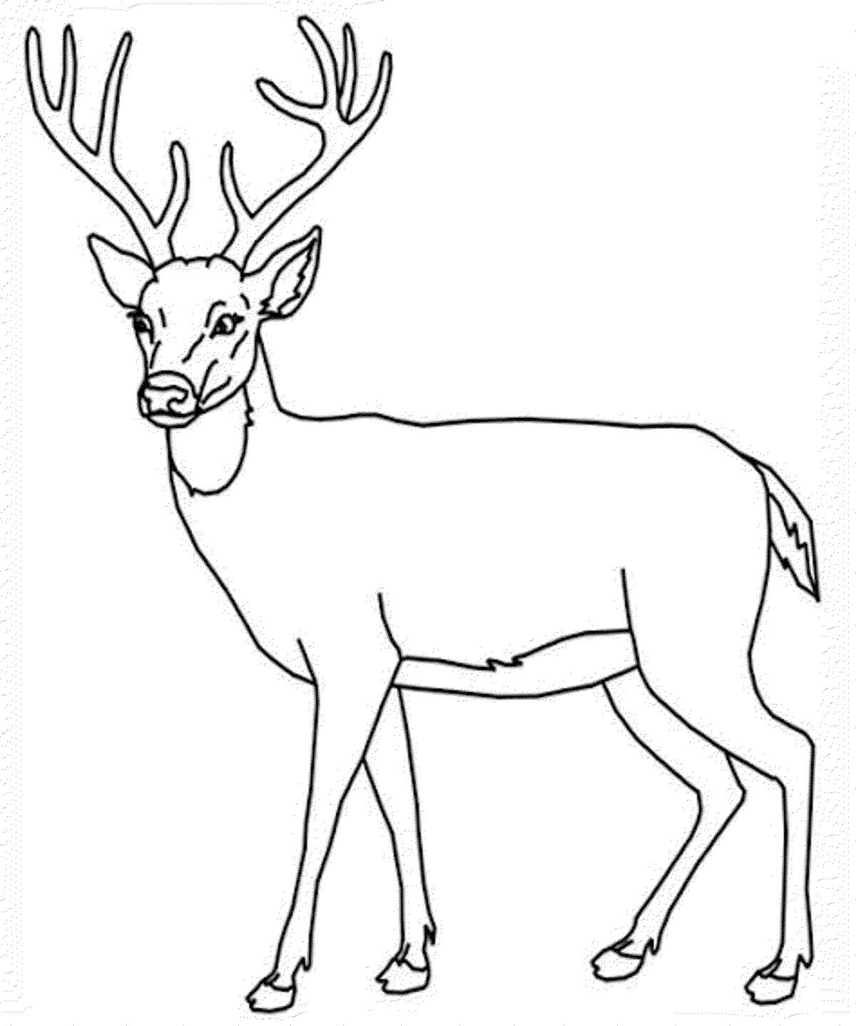 Картинка для детей олень раскраска для детей
