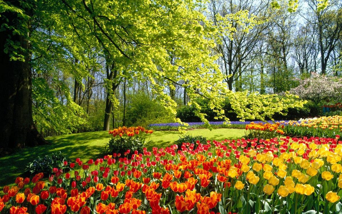 Днем, картинки яркая весна