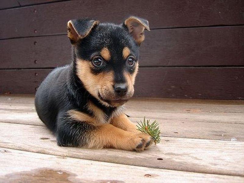 Открытки, картинки смешной щенок