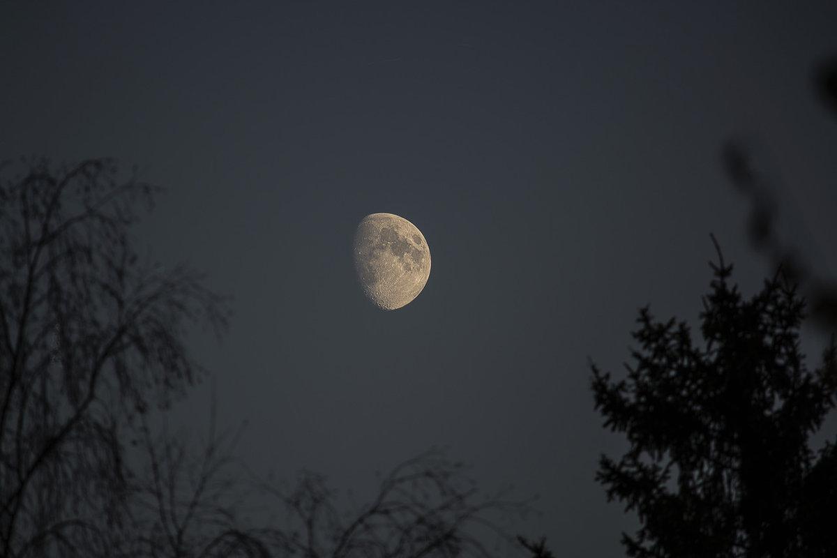 сказать естественное фото ночной луны виды мяты