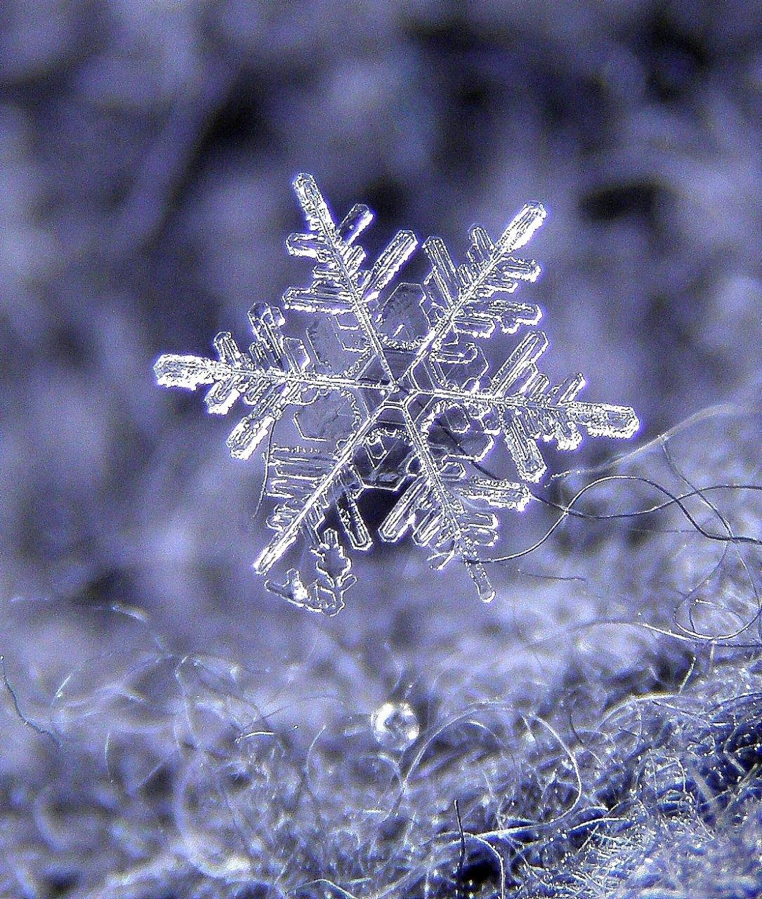 состав сменяющегося картинки зима природа снежинки скрывает, что