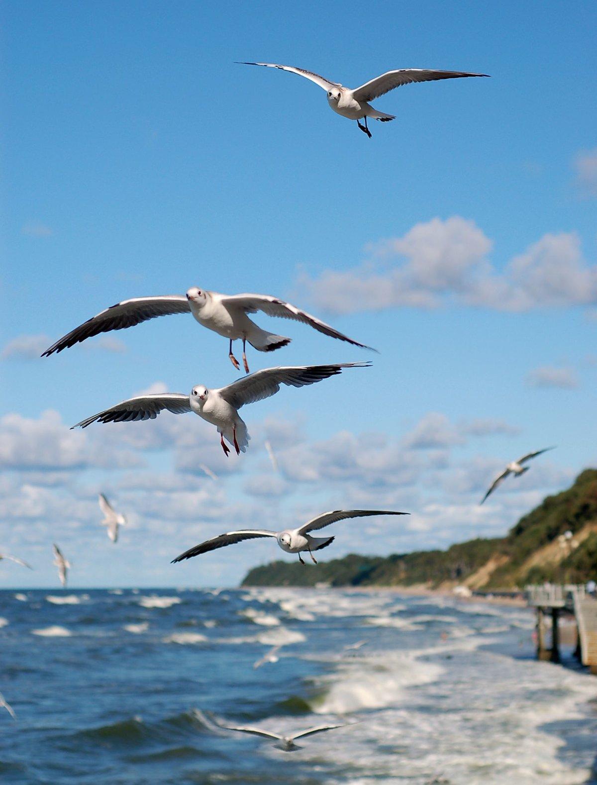 фото морских чаек в полете нему наш главный