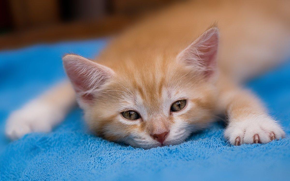 Картинки с котятами рыжими