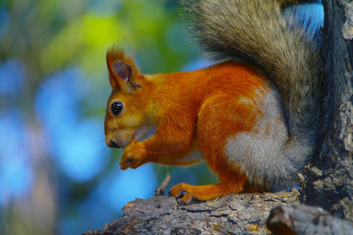 открытку фотографии всех лесных животных для домашнего