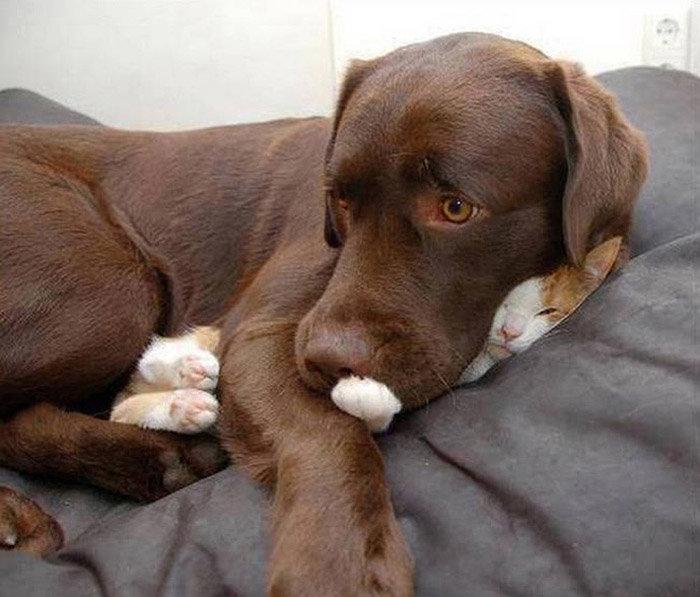 Картинки, смешные собаки фото с надписями до слез