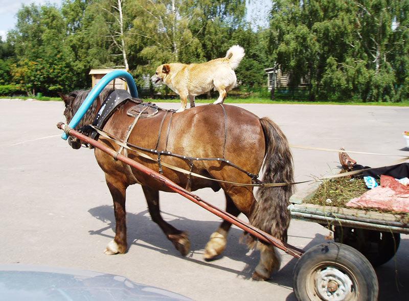 Картинки лошади на телегу