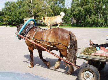 лошадь с телегой в деревне