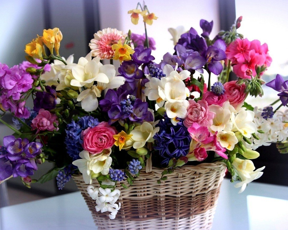 Комнатные, цветы день рождения фото
