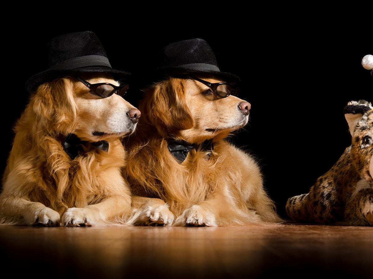 Обои с прикольными собаками