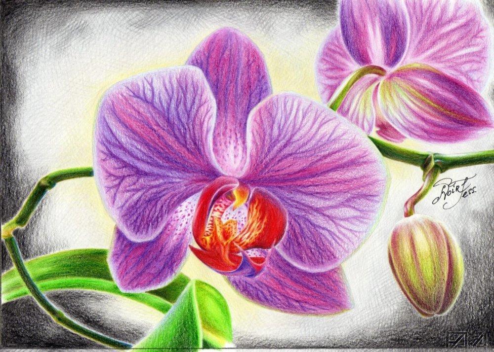 картина для распечатки орхидея мне