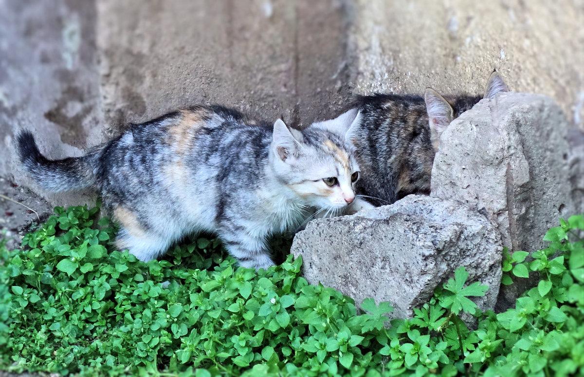 Картинки о котятах бездомных