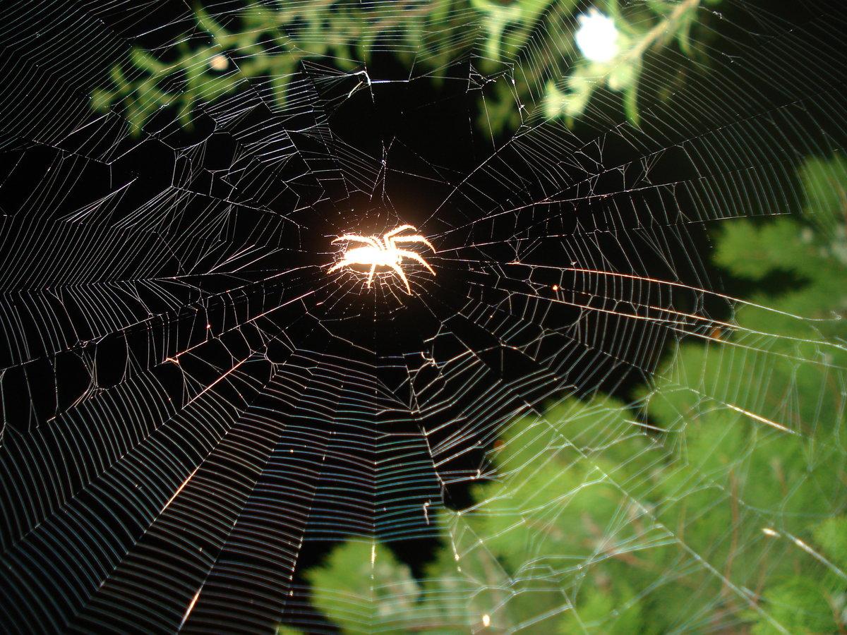 паук большой на паутине фото стен перед штукатуркой