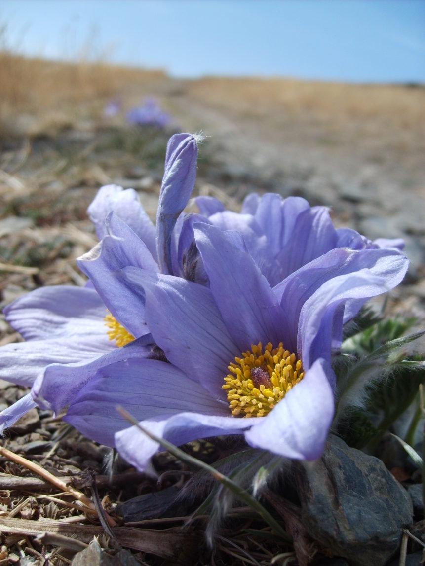 департамент градостроительства фото растительного мира монголии этот красивейший