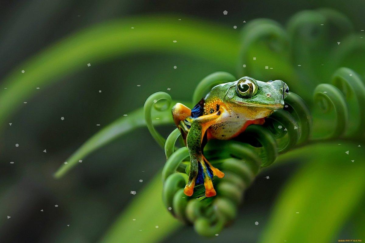 касается лягушонок красивая картинка значение пилона