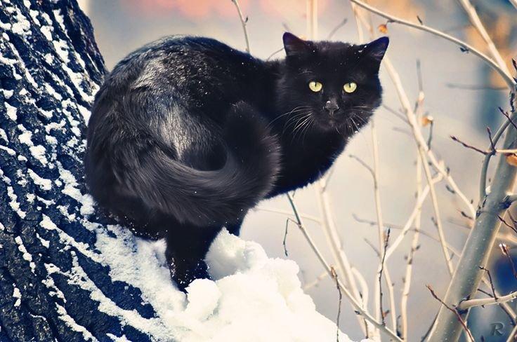 воздушных картинка черная кошка в снегу конкурсы для взрослых