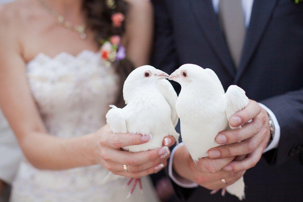 Свадебные картинки с голубями красивые