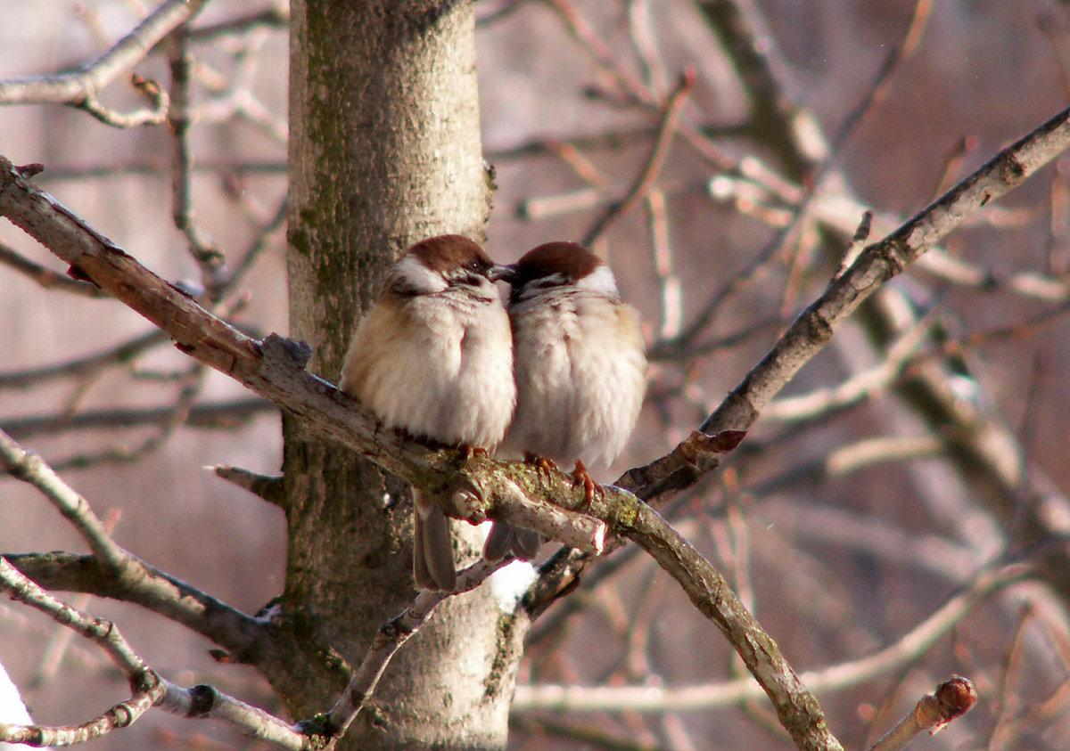 семья фото поцелуя птички половина человечества