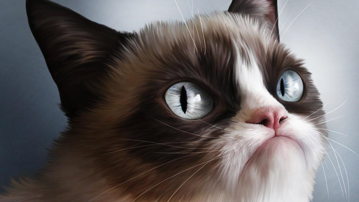 Картинки на рабочий стол кот прикольный, днем святого валентина