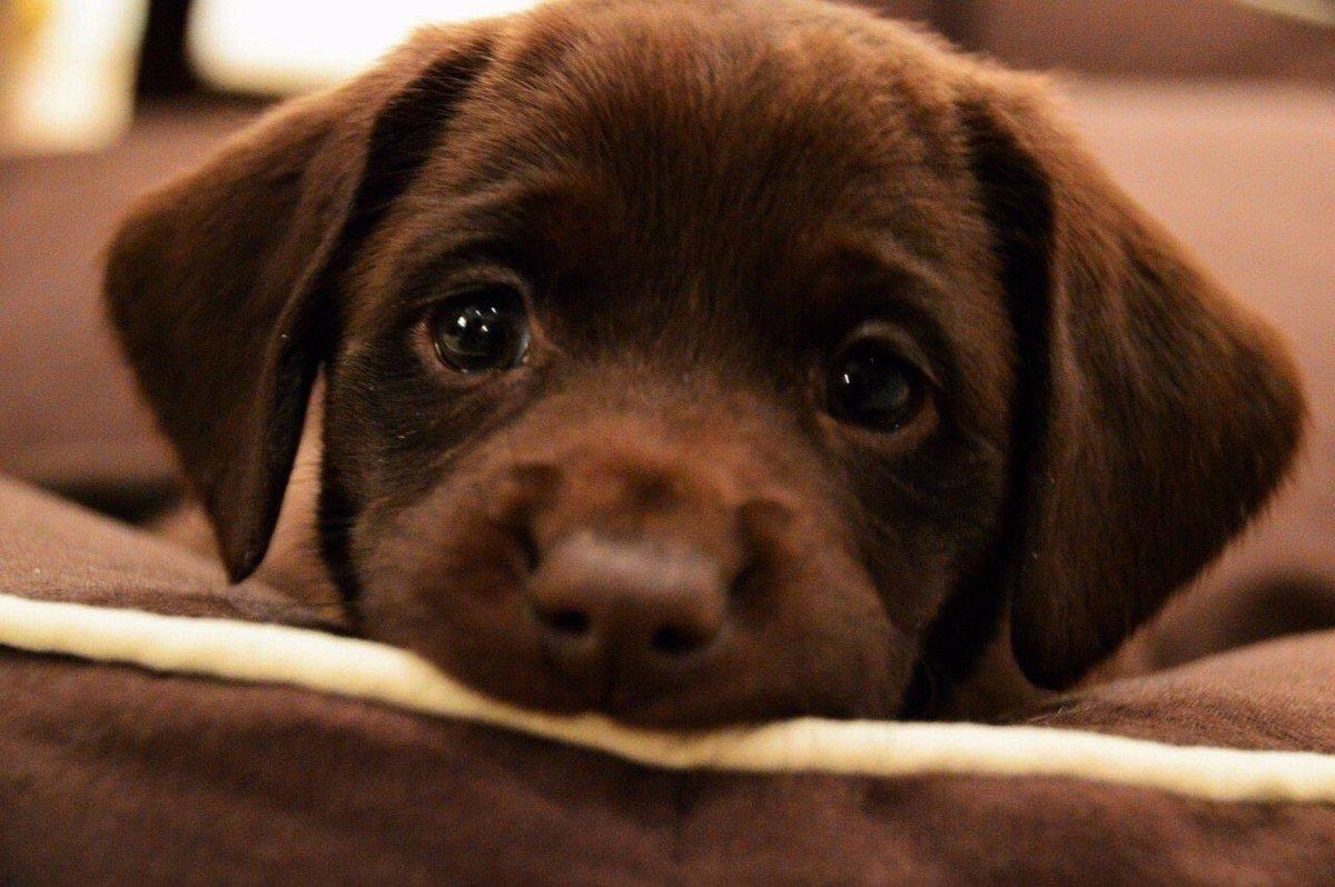 грустная картинка щенка узбечка балует