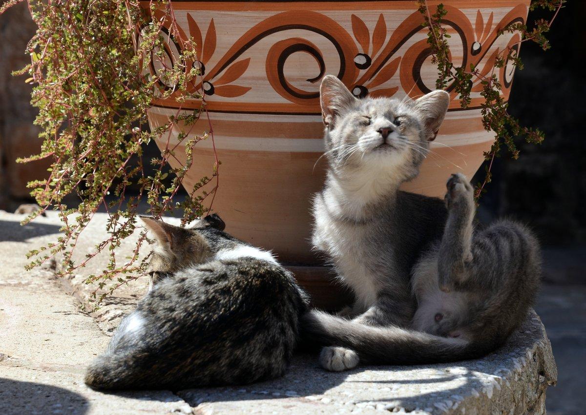 растениям греческие кошки картинки феи
