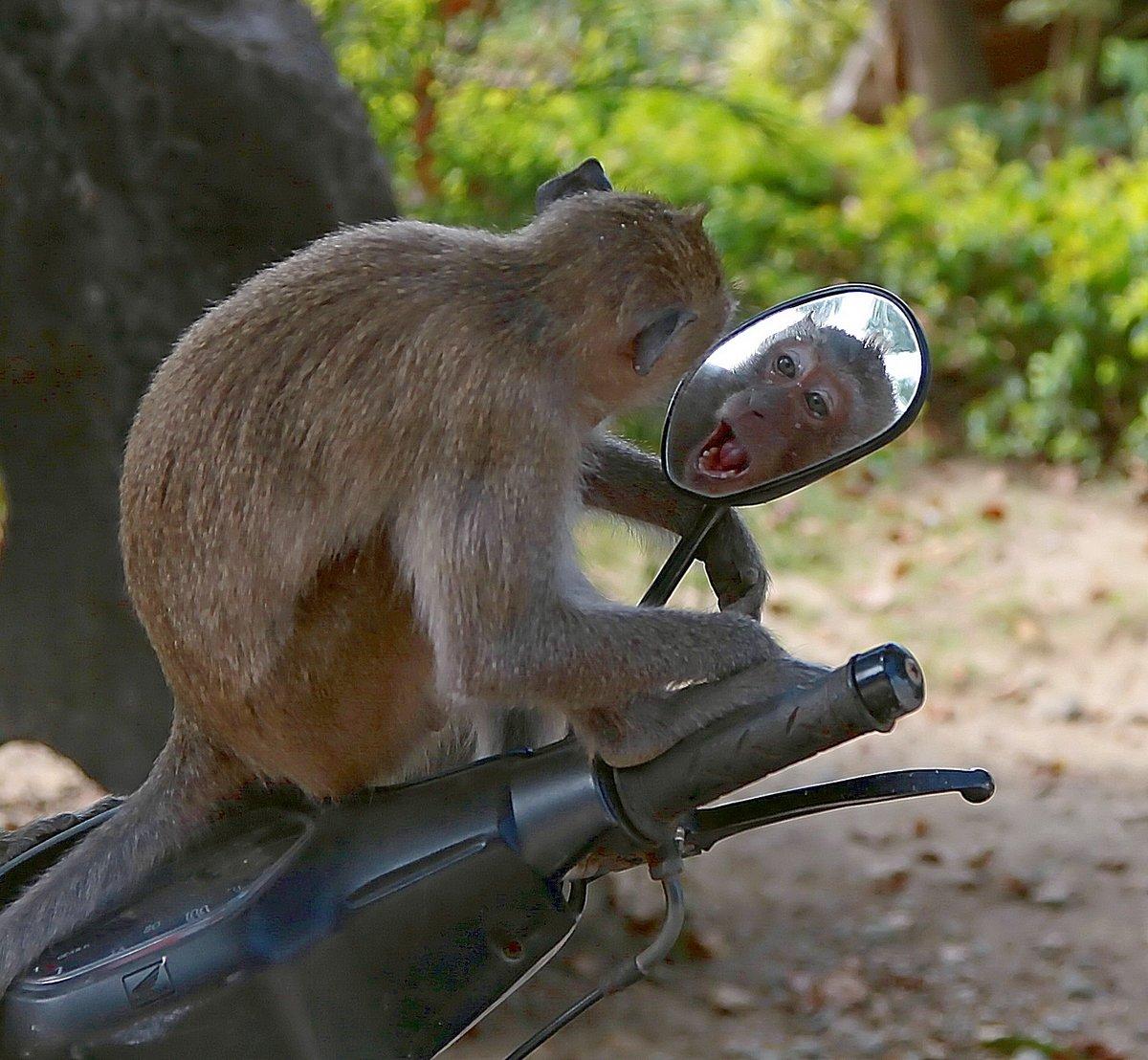 По дороге с облаками обезьянка картинки замочками, по-модному