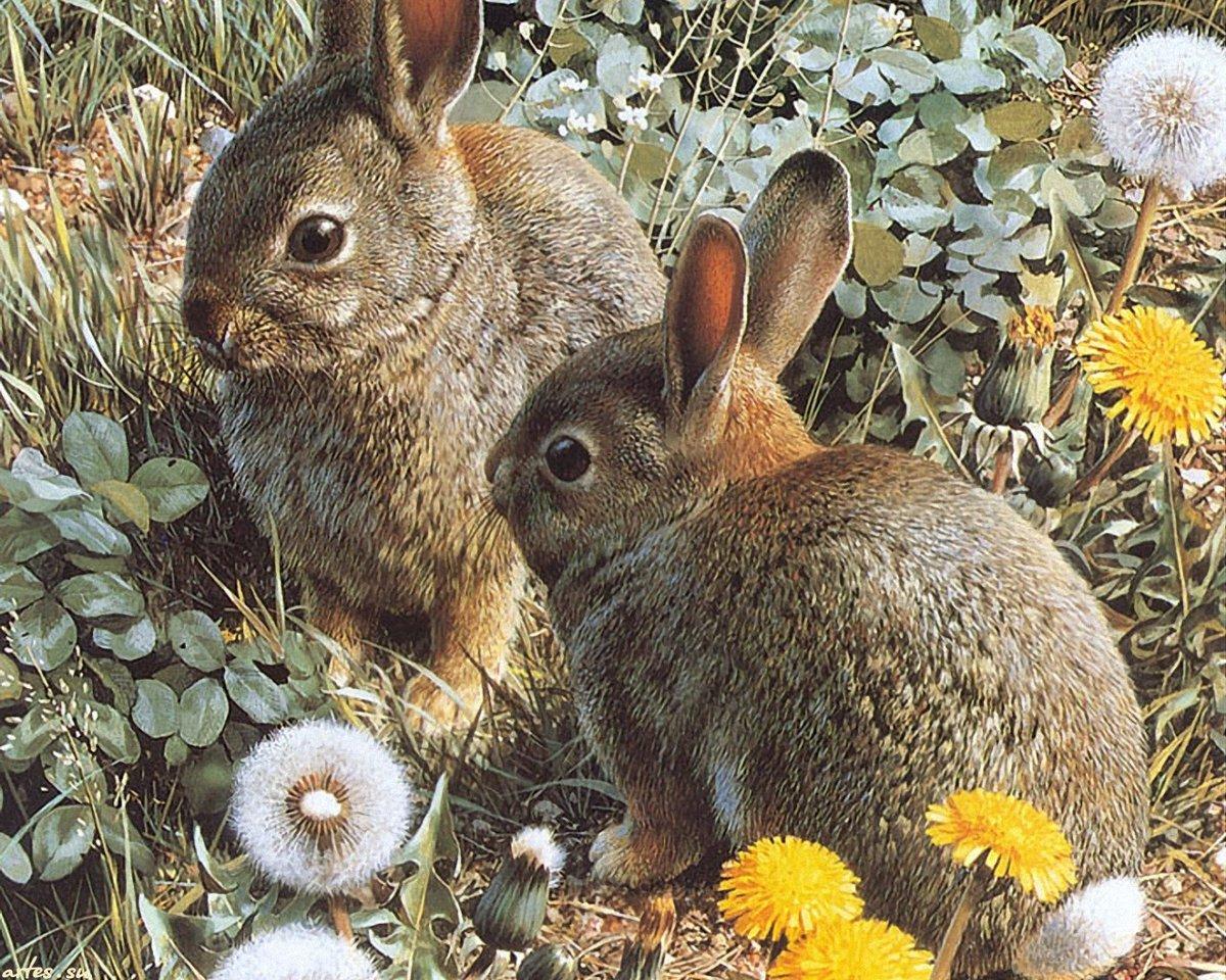Картинка с зайцем зайцами, день