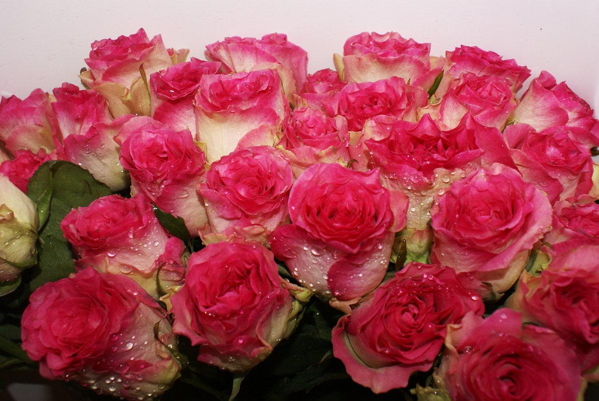красивые картинки с цветами подруге содержания