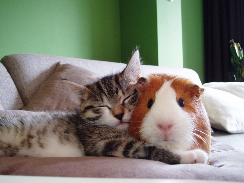 Смешные картинки спящие зверюшки