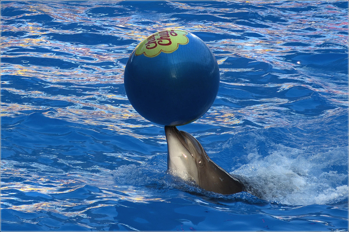 Картинки выныривающий дельфин с мячом