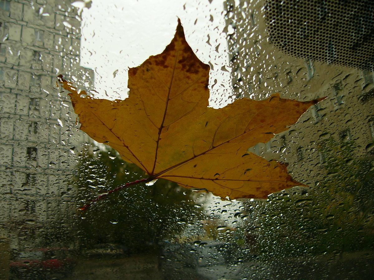 Гифка дождь за окном осень нужна