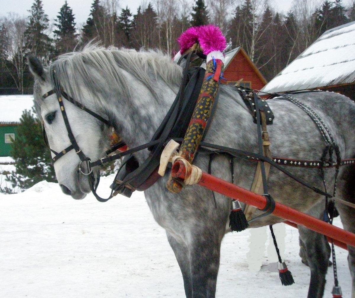 этому фото коней в упряжке перечень дополнительного