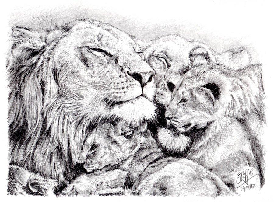 лев и тигрица картинка черно белая традиционно